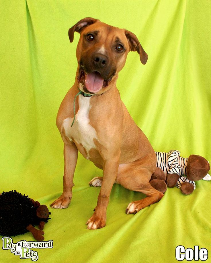Dogs To Adopt In Akron Ohio