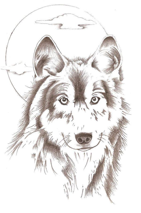 Wolf Portrait by TheLob on DeviantArt