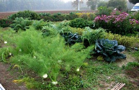 Oltre 1000 immagini su orto giardino ortogiardino for Piccoli alberi da frutto