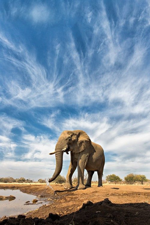 Whispy Elephant by Keith Connelly Photographics