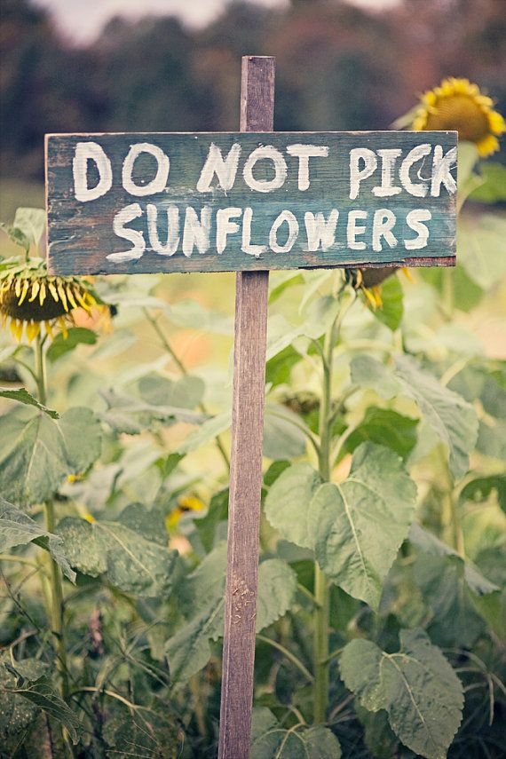 Do Not Pick Sunflowers (1) From: Etsy, please visit