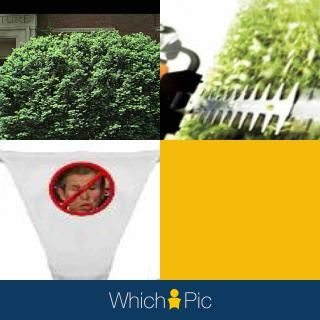 Bush trimmed bush no bush