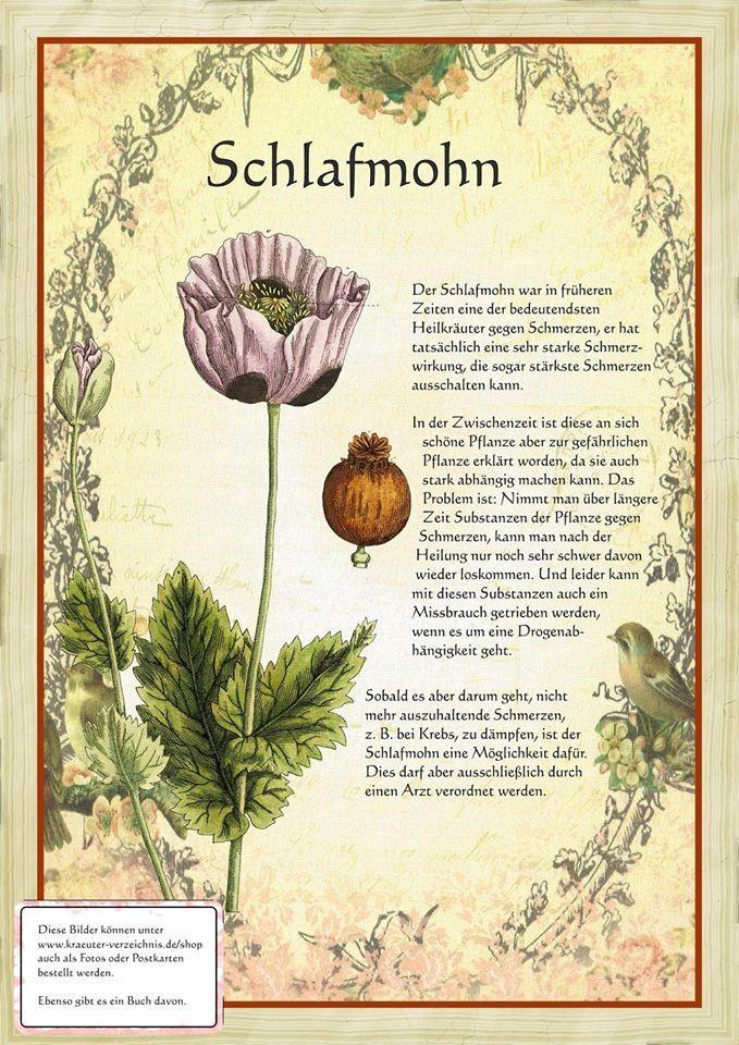 Schlafmohn http://www.kraeuter-verzeichnis.de/
