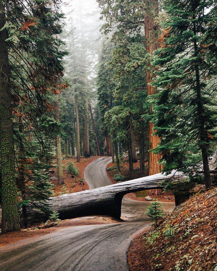Sequoia National Park, CA, U.S.   Photography by © Logan Davidson