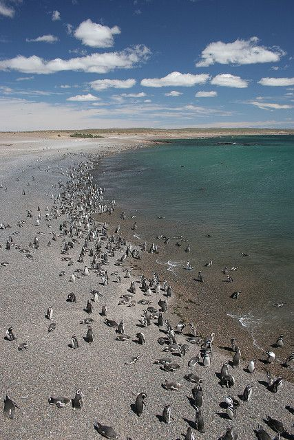 Punta Tombo, Argentina  Punta Tombo is a nature reserve about 100km from  Trelew. It has the largest colony of Magellanic  Penguins on the continent, which can reach over a  million. The landscape enroute is uninteresting -  flat, dry and deserty for the most part.