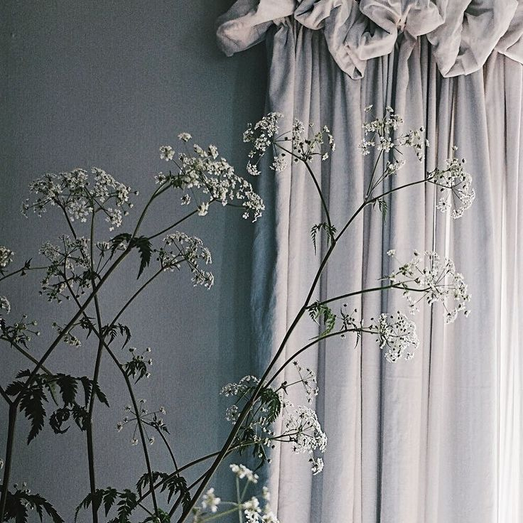 Curtains and cow parsley that's how I'm rolling today.... #tfispring #botanicalpickmeup #hurrayforplay #cornersofmyhome #simplethingsmadebeautiful #thesimpleeveryday #ofsimplethings #ofquietmoments #theslowcollective #cornersofmyworld #nestandflourish #mybeautifulsimplicity #nestandthrive #simpleandstill #theartofslowliving #livefolk #verilymoment #fosterthoughtfulness #todaysgoodthing #myeverydaymagic #thatsdarling #thelifestylecollective #mystoryoflight #thatauthenticfeeling…