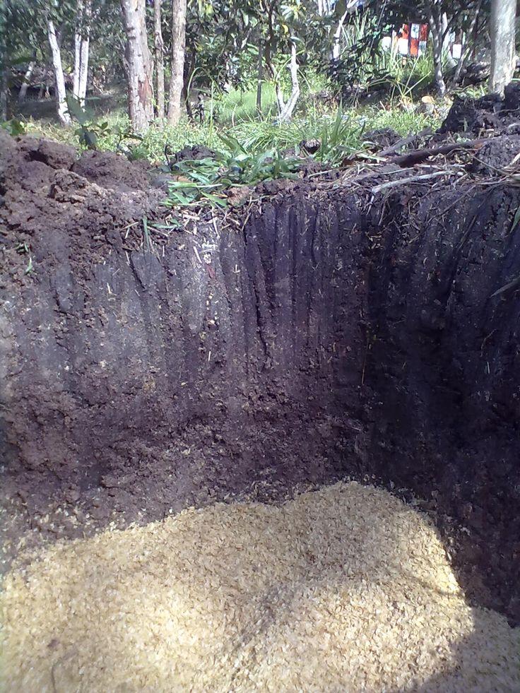 mejorando suelo,aplicando abonos orgánicos