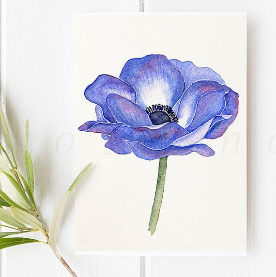 Anemone Watercolor
