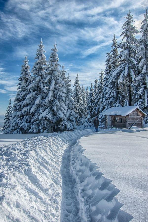 Inverno na floresta. Fotografia: Eva0707.