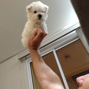 All hail the westie, King of Instagram!   25 Photos To Prove That The Westie Is King Of Instagram