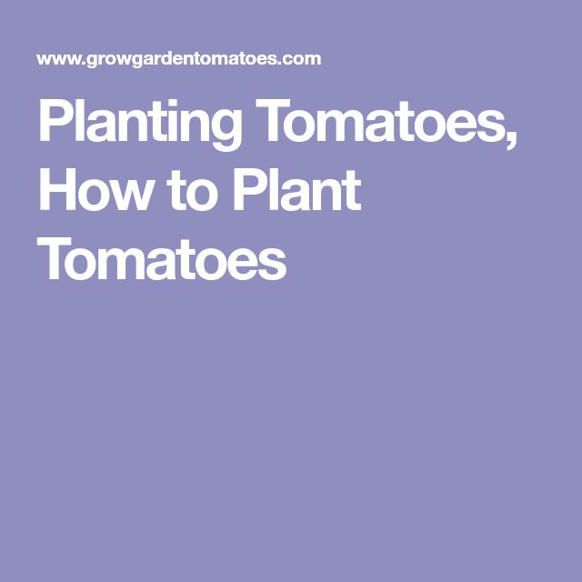Planting Tomatoes, How to Plant Tomatoes