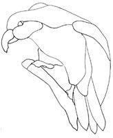 Glass Kaka. New Zealand native parrot pattern.