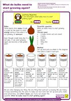 Outstanding Science Year 2 - Plants | What do bulbs need to start growing