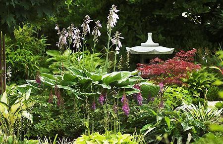Gestaltungsideen und Pflanzen zu Asia Garten gesucht - Seite 1 - Gartengestaltung - Mein schöner Garten online