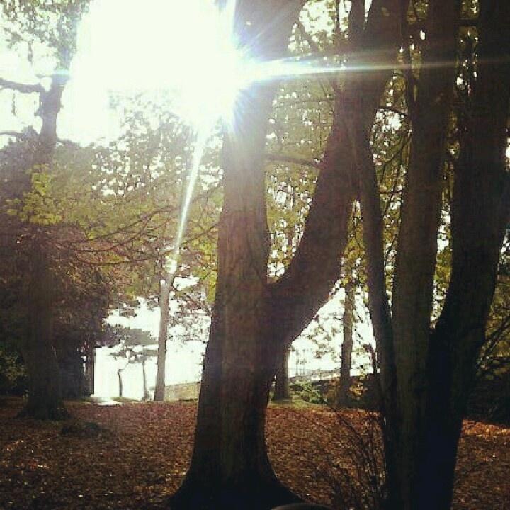 Autumn, Ballymena, Northern Ireland