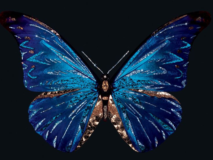 Michele Astolfi - Butterfly