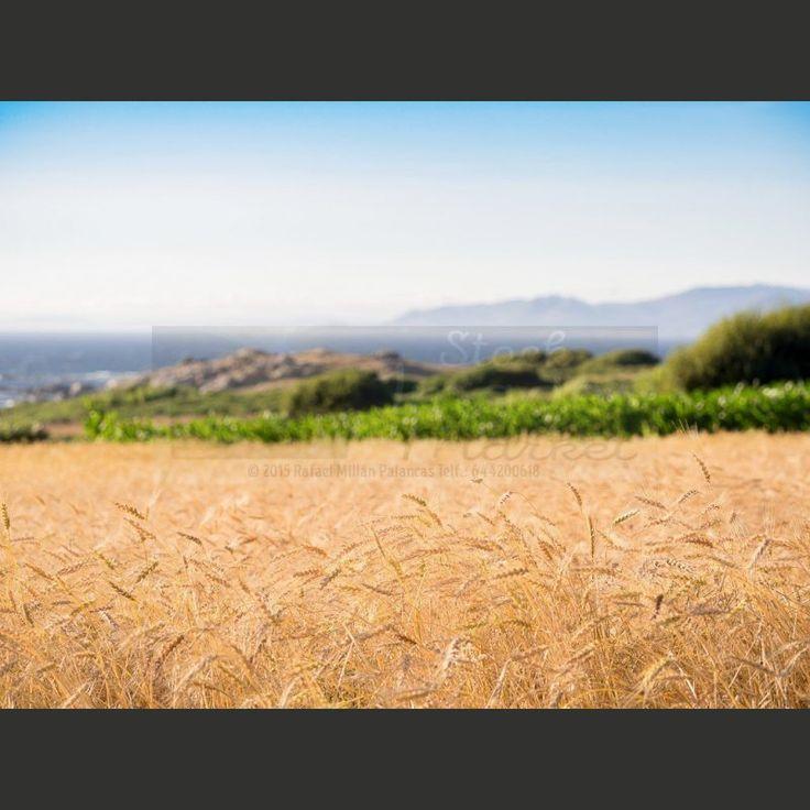 Galicia Calidade!!! Más fotos a la venta y gratis en nuestro banco de imágenes http://www.comprarimagenesbaratas.com #paisajes #landscape #images #fotos #imágenes #bancodeimagenes