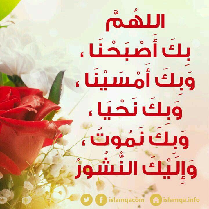 صور اسلامية Words Of Wisdom Wisdom Blessed Are Those