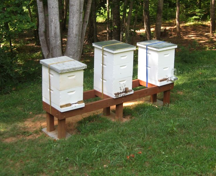 Bee Hives. Not TOOOO close to the house, but must have that yummy honey.