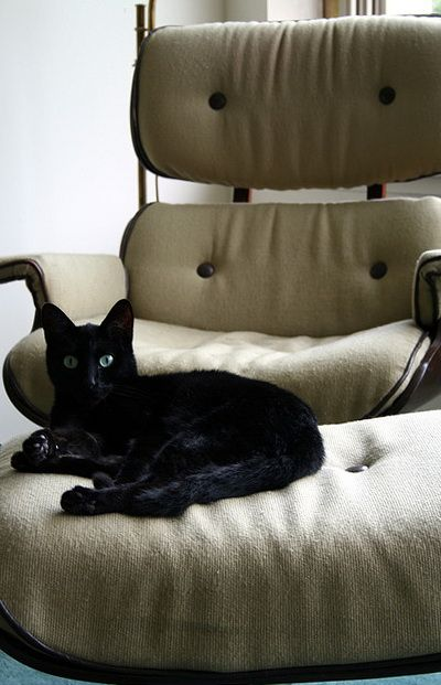 Black cat on cream Eames Lounge Chair