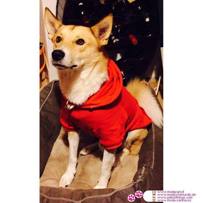 Sweat-Shirt Uni Rouge pour Grands Chiens #VetementChiens - Sweat-Shirt Rouge pour chiens, conçu spécifiquement pour les Grands Chiens (par ex. Labrador): a un capuche réglable avec coulisse et poche kangourou