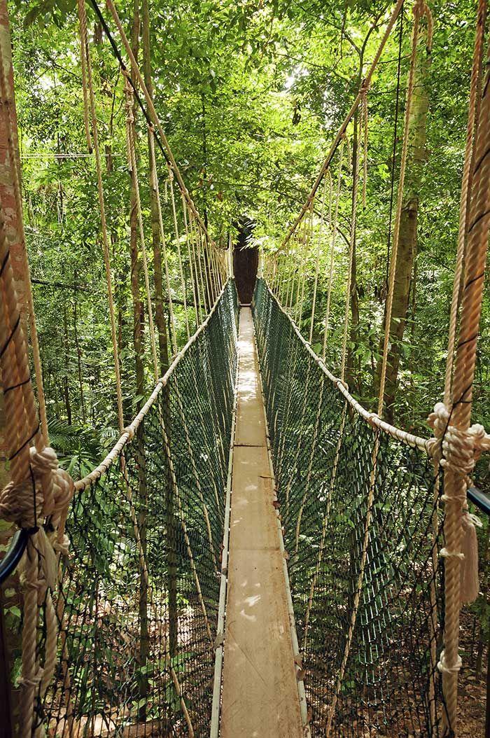 Puentes colgantes de Taman Negara, Malasia  Aunque no a tanta altura como los anteriores, el conjunto de puentes colgantes del bosque tropical más antiguo del mundo, Taman Negara, provocará vértigo a más de uno. A lo largo de 510 metros y casi llegando a las copas de árboles de miles de años de antigüedad discurren esta serie de puentes que se mueven tambaleantes bajo tus pies. Miedo o no, la panorámica y la sensación de estar tan alto en medio de la jungla es única, así como el posible…