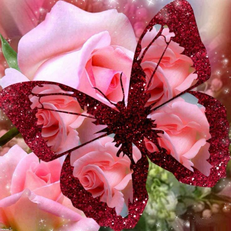 Pink butterfly & roses | Beautiful butterfly | Pinterest
