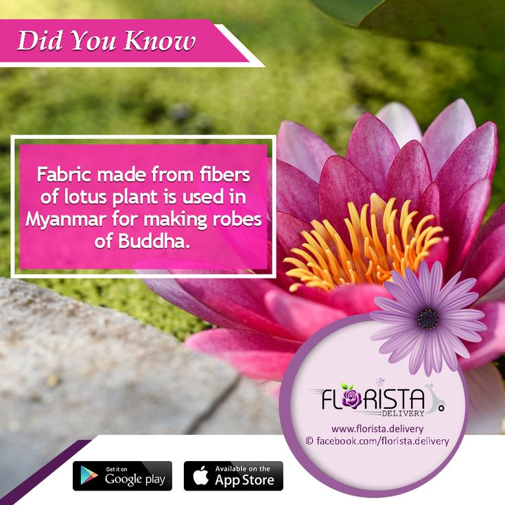 Flower images 2018 lotus flower facts flower images lotus flower facts the flowers are very beautiful here we provide a collections of various pictures of beautiful flowers charming cute and unique free mightylinksfo