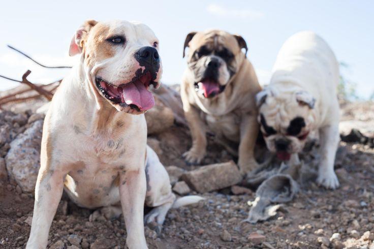"""The Puppies""  - Skye Macca & Jay"