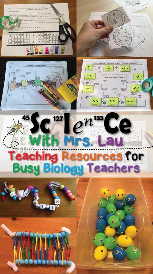 I love to create activities that students can enjoy while learning.  Activities that biology teachers love!