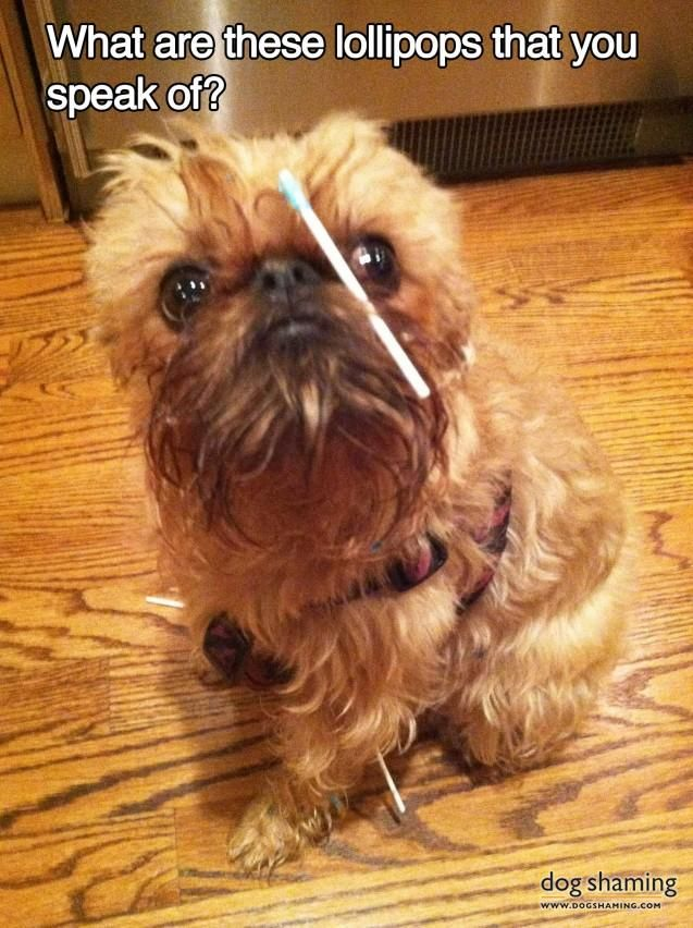 You guys it's a little dog named Meatball with a lollipop stick stuck to his face. Has anything ever been greater than this moment? Not really.
