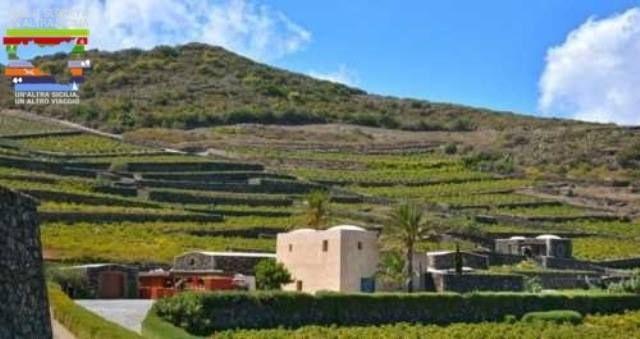 Pantelleria, nature et vin Zibibbo! Une semaine à la découverte de cette magnifique ile, en tout liberté et comfort! 7 nuits en Dammuso #sicile #ecotours #ecotourisme #vacances #voyages #offres #mer #unaltrasicilia #pantelleria #nature #vins #vinzibibbo #dammuso #dégustationdevin