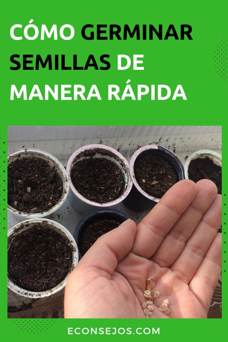 Aprende a germinar semillas de manera rápida en casa