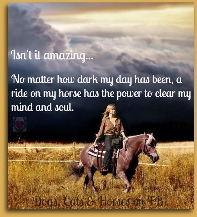 17 best images about horse quotes on pinterest