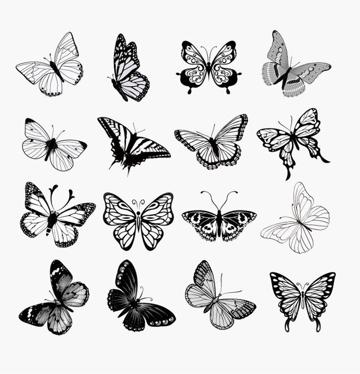 Set of Butterflies Silhouettes Vector Illustration | Free Vector ...
