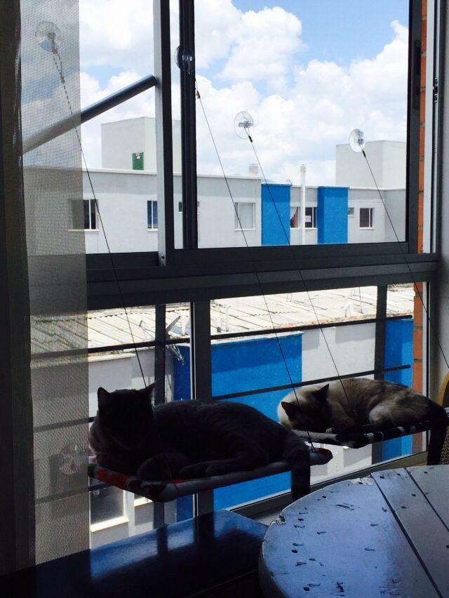 Window beds!!! Lo mejor para tus Gatos.