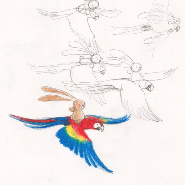 "Ciacio and macaw flying, sketch for ""Ciacio in Amazonia"" picture book by Sarah Khoury"