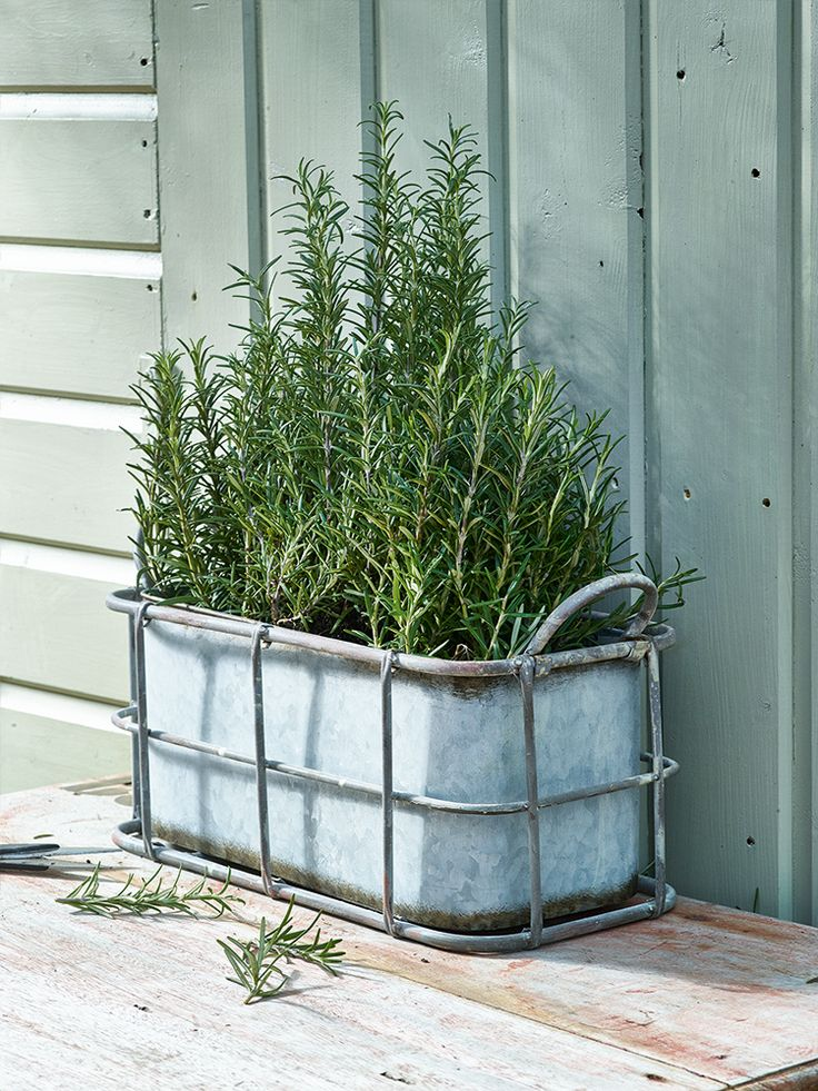 Trough shaped planters are perfect for planting your favourite blooms all in a row.