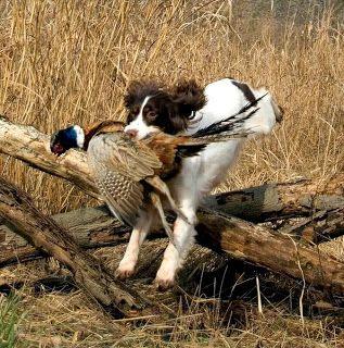 Best Fly Fishing Dog Breeds