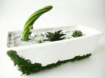 Mini jardín de cactus y suculentas en matera decorada a mano