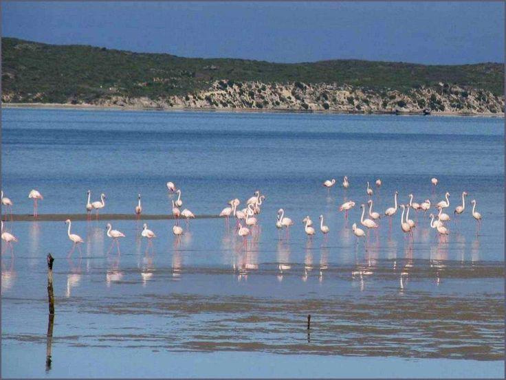 Flamingos love West Coast National Park
