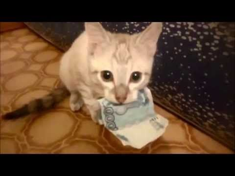 Kitten Steals Money and Refuses to Give it Back • ViralEOM