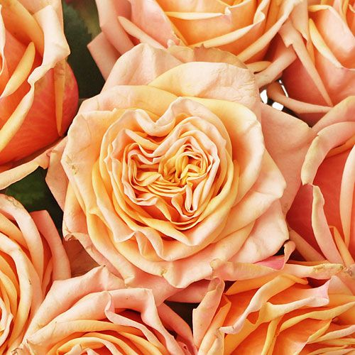 Peach Garden Rose 58 best peach wedding flowers images on pinterest | peach weddings