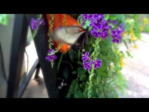Butterflies LIVE! Nothing Like Fluttering Butterflies to Brighten your day! Here's a 2-minute virtual tour from our- YouTube channel!