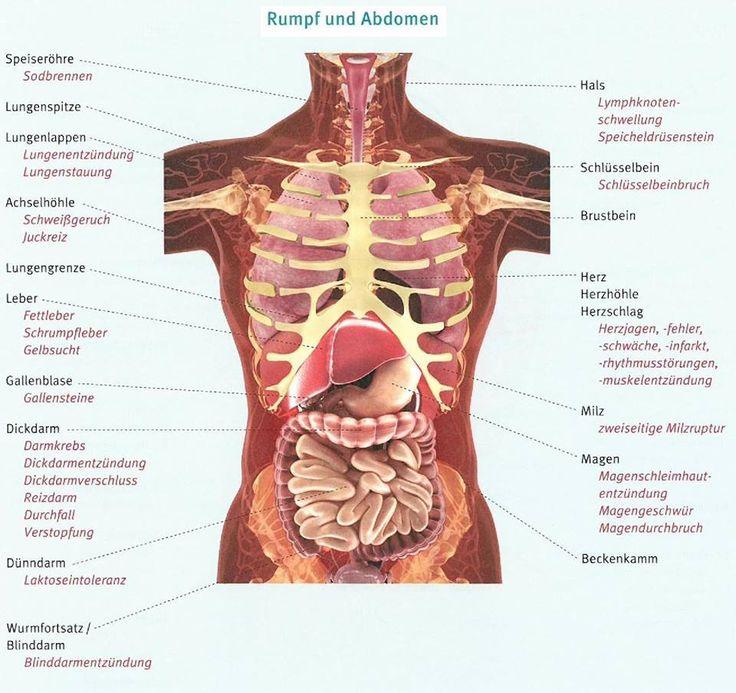 Ausgezeichnet Lymphknoten Hals Anatomie Galerie - Anatomie Von ...