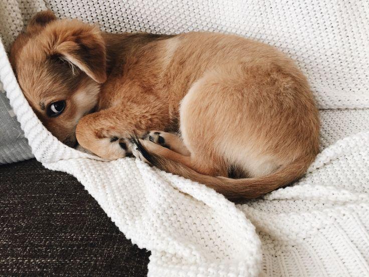 Hundar är också blyga.
