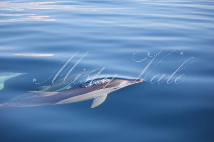 Dolphin having a look around