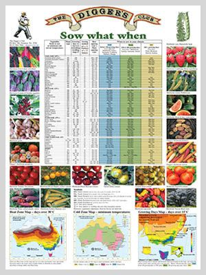 1000 Ideas About Vegetable Planting Guide On Pinterest Florida Gardening Florida Plants And