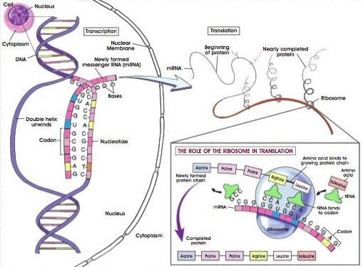 Homework help cell molecular biology