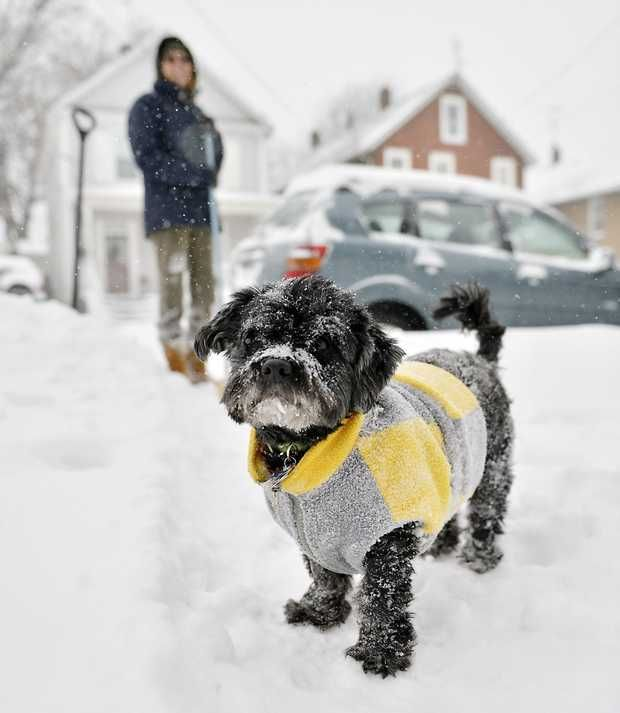 Snow sticks to Nikko's fur and sweater as the 10-year-old Havanese dog plays in the snow with his owner, Laurie Edwards, at rear, outside their house on Plum Street in Erie, Pa. on Thursday, Jan. 2, 2014. ANDY COLWELL, ERIE TIMES-NEWS — AP  http://www.newsobserver.com/2014/01/02/3501512/arctic-blast-of-winter-weather.html
